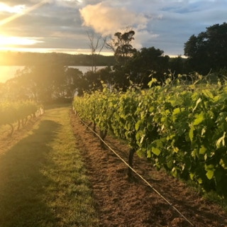 Sunset over the Waterton Hall Wines Estate
